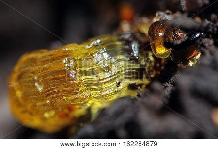 Yellow embossed resin, interesting ephemera on a tree