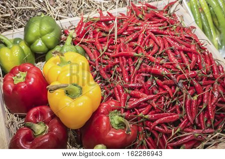 The chili pepper of plants from the genus Capsicum members of the nightshade family Solanaceae. In Britain Australia New Zealand South Africa India and other Asian countries the word