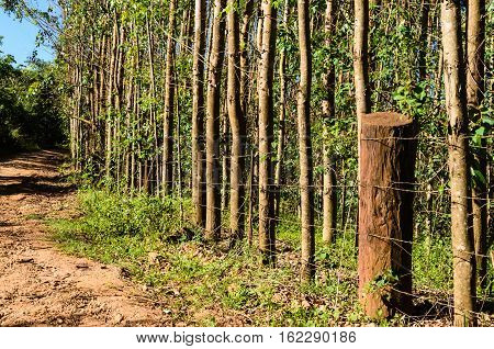 rural landscape with fence and eucalyptus forest in countryside of Brazil