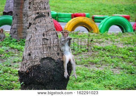 very funny monkey sitting on a palm tree, as a person sitting on a chair, swung his legs, leans back on a tree trunk, intelligent, serious look