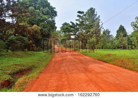 Dirt road in the jungle of Uganda at early morning after night rain central Africa