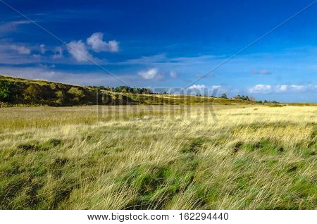 Gras and heath landscape near Kampen Sylt island.
