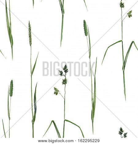 seamless pattern with watercolor grass, background with hand drawn cereal plants, herbal ornament