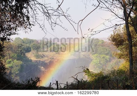 a rainbow over the Victoria Falls in Zimbabwe in the background a typical African bush