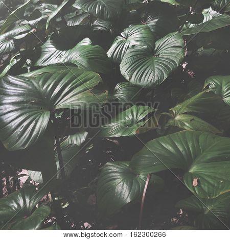Leaf Plant Botanical Green Concept