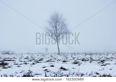 lonely tree in a vacant lot in the morning in a dense fog