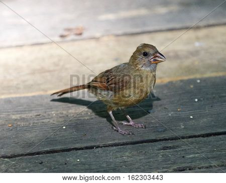 Beautiful Isolated Picture With A Funny Bird On The Wooden Floor