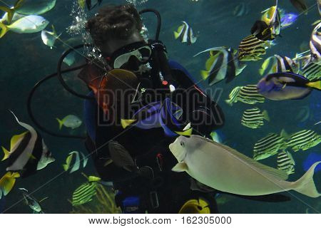 Colorful Fish in Water in an Aquarium