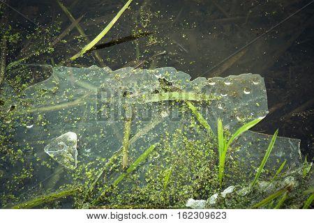 Frozen Ice In A Pond