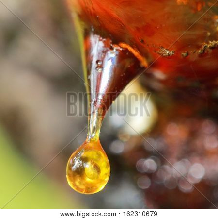 Drop of the resin from the resin of the funnel on a tree