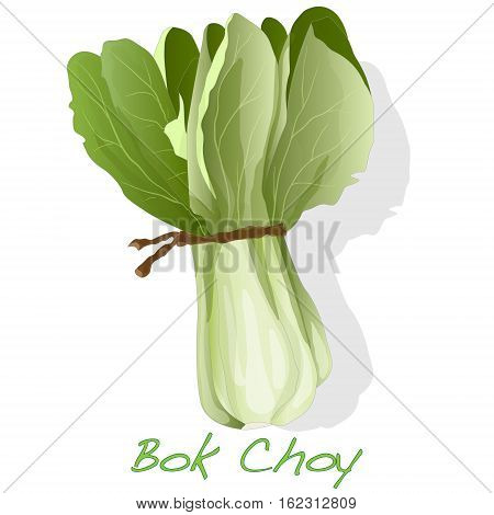 Bok Choy Vegetable Vector
