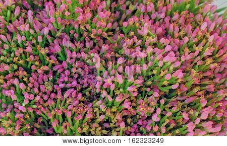 Background of  Centaurium  erythraea small pink buds