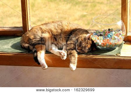 Small older cat sleeping comfortably against a glass bowl full of marbles on a large bay window sill.