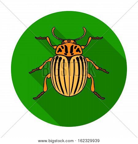 Colorado beetle icon in flat design isolated on white background. Insects symbol stock vector illustration.