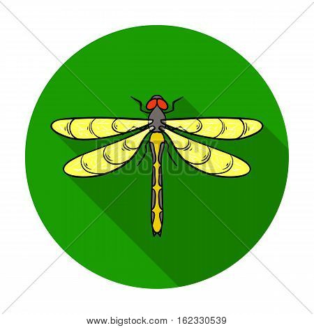 Dragonfly icon in flat design isolated on white background. Insects symbol stock vector illustration.