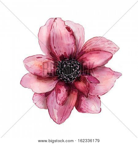 Pink watercolor flower (hand drawn)