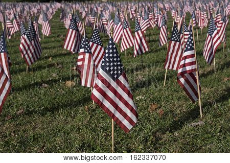 American flag in a sea of flags honoring Veterans that gave their lives for country