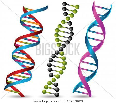 Dna strands. Vector