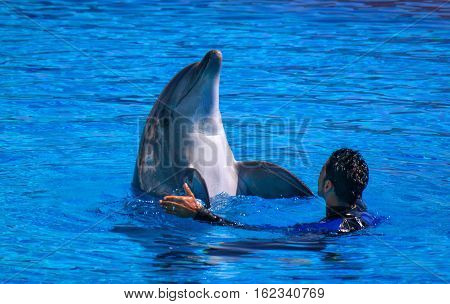Alanya, Turkey - May 3, 2014: Dolphin Sealanya - shows featuring dolphins and sea lions. Speech trainer and dolphin.
