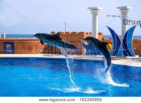 Alanya, Turkey - May 3, 2014: Dolphin Sealanya - shows featuring dolphins and sea lions. A pair of dolphins jumping rope.