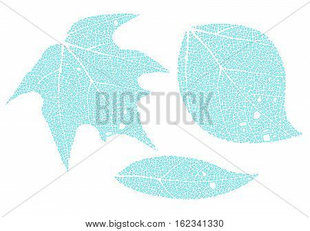 Blue leaves formed with water drops isolated on white.