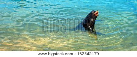California Sea Lion in marina in Cabo San Lucas Baja Mexico B C S