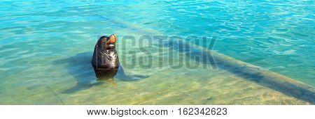 Sea Lion in marina in Cabo San Lucas Baja Mexico BCS