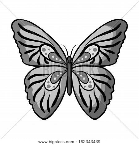 Butterfly icon in monochrome design isolated on white background. Insects symbol stock vector illustration.