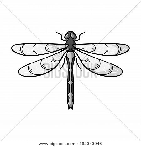 Dragonfly icon in monochrome design isolated on white background. Insects symbol stock vector illustration.