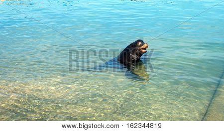 California Sea Lion in Cabo San Lucas Baja Mexico B C S