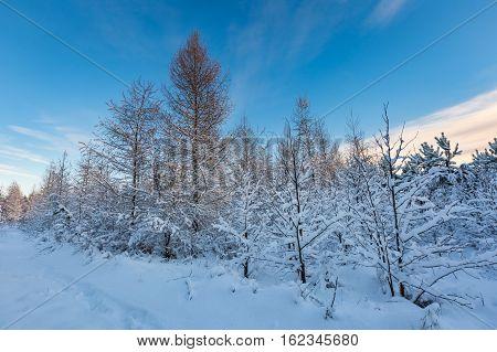 Fantastic Morning Winter Landscape