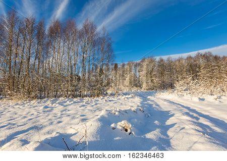Snow Covered Polish Landscape.