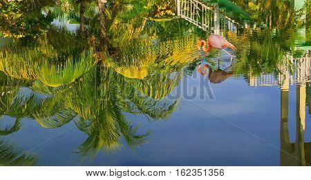 nice amazing beautiful view of tropical garden reflected in water upside down with pink flamingo bird walking in water