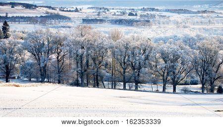 Winter Snow Trees, Winter Wonderland, Beautiful Scenery, White Christmas