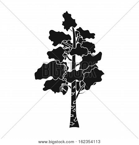 Birch tree icon in black design isolated on white background. Russian country symbol stock vector illustration.