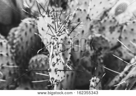 Cacti In The Greenhouse, The Cultivation Of Cacti, Rare Cactus Plants With Flowers. Filn Effect And