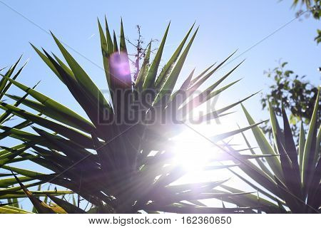 desert plants grow in the hot summer sun
