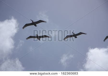 sea birds circle over the sunny beach