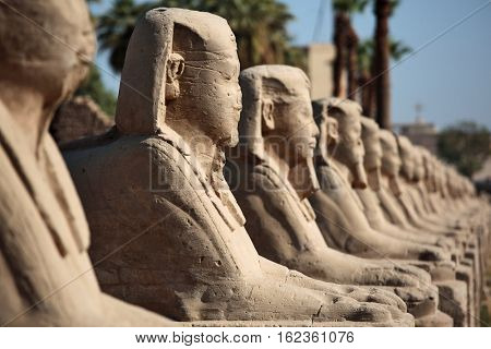 Row of ancient sphinxes at Luxor temple in Egypt
