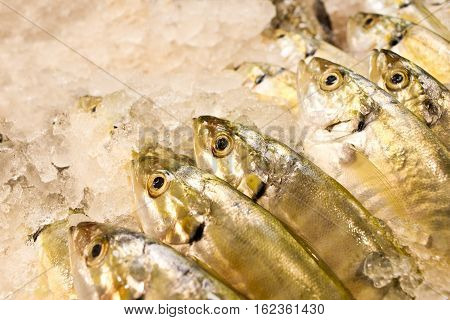 Freshly catch fish in supermarket. Big eye yellow fish