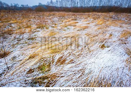 Bad Weather Winter Meadow Landscape