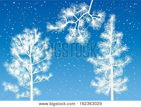 illustration with cedar trees on blue background