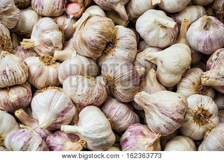 Ripe fresh garlic for sale on market