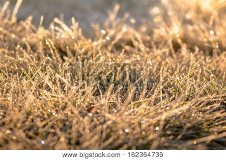 Grass glistening in the golden morning sun as frost evaporates