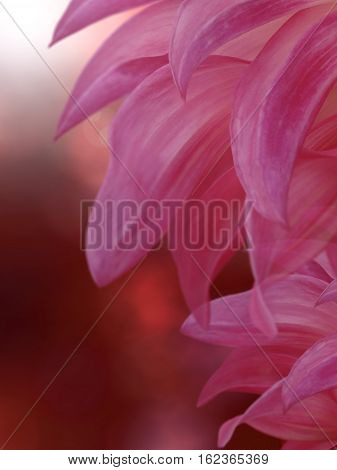 flower big petals on a blurred red sunny background. floral composition. floral background. Nature.