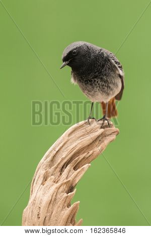 Small bird on a trunk with a green background