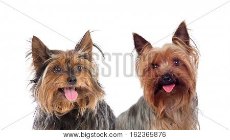 Beautiful dogs isolated on a white background