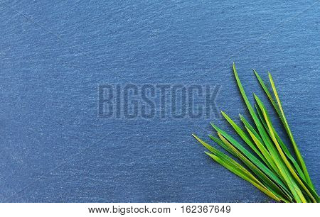 Grass on a stone with free space to write