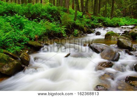 River in the woods and trees in the fog