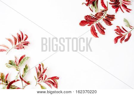 red leaves frame on white background. flat lay.